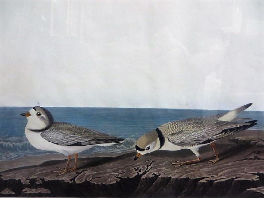 J. J. Audubon. Piping Plover. Plate 220 - 2