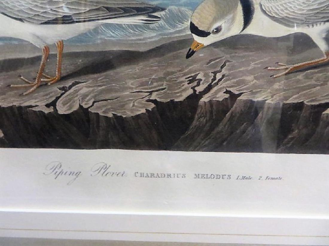 J. J. Audubon. Piping Plover. Plate 220 - 3