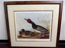 J. J. Audubon. Red Headed Duck.