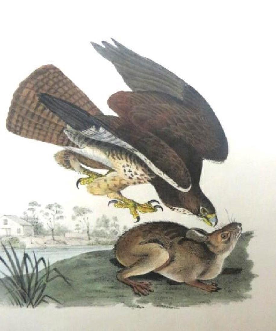 J.J. Audubon. Octavo. Common Buzzard No.6