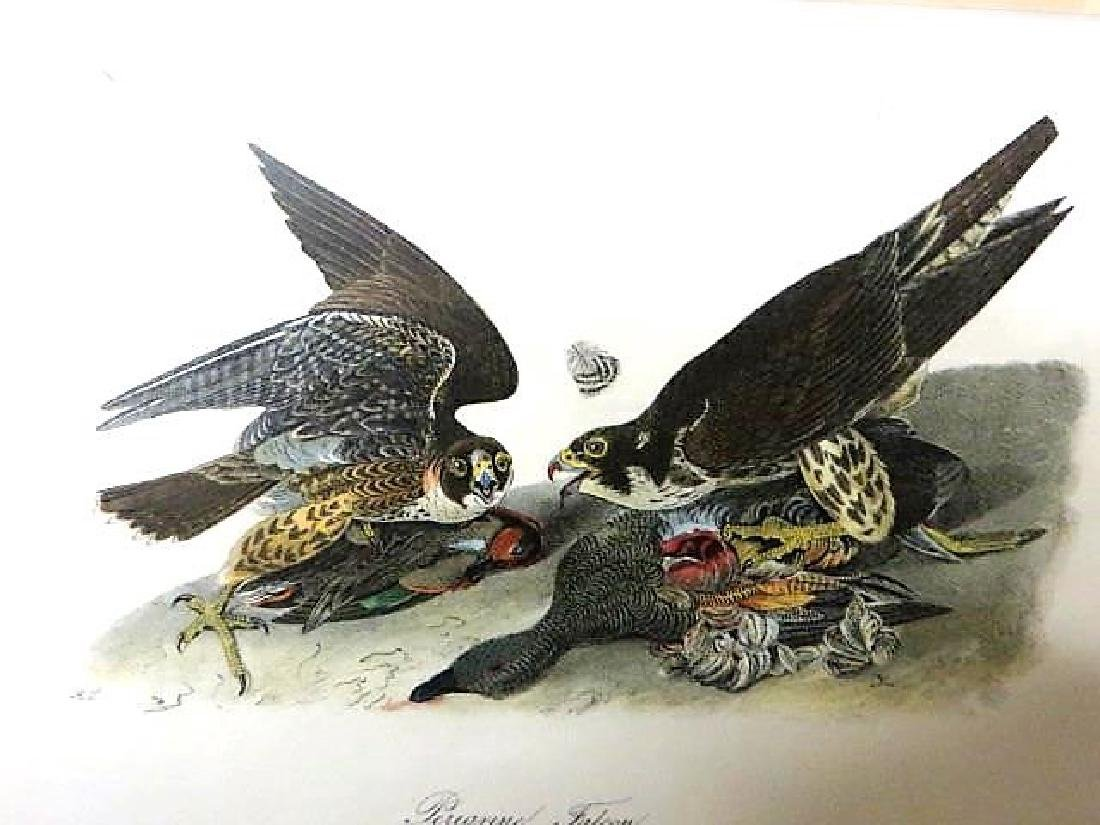 J.J. Audubon. Octavo. Peregrine Falcon No.20