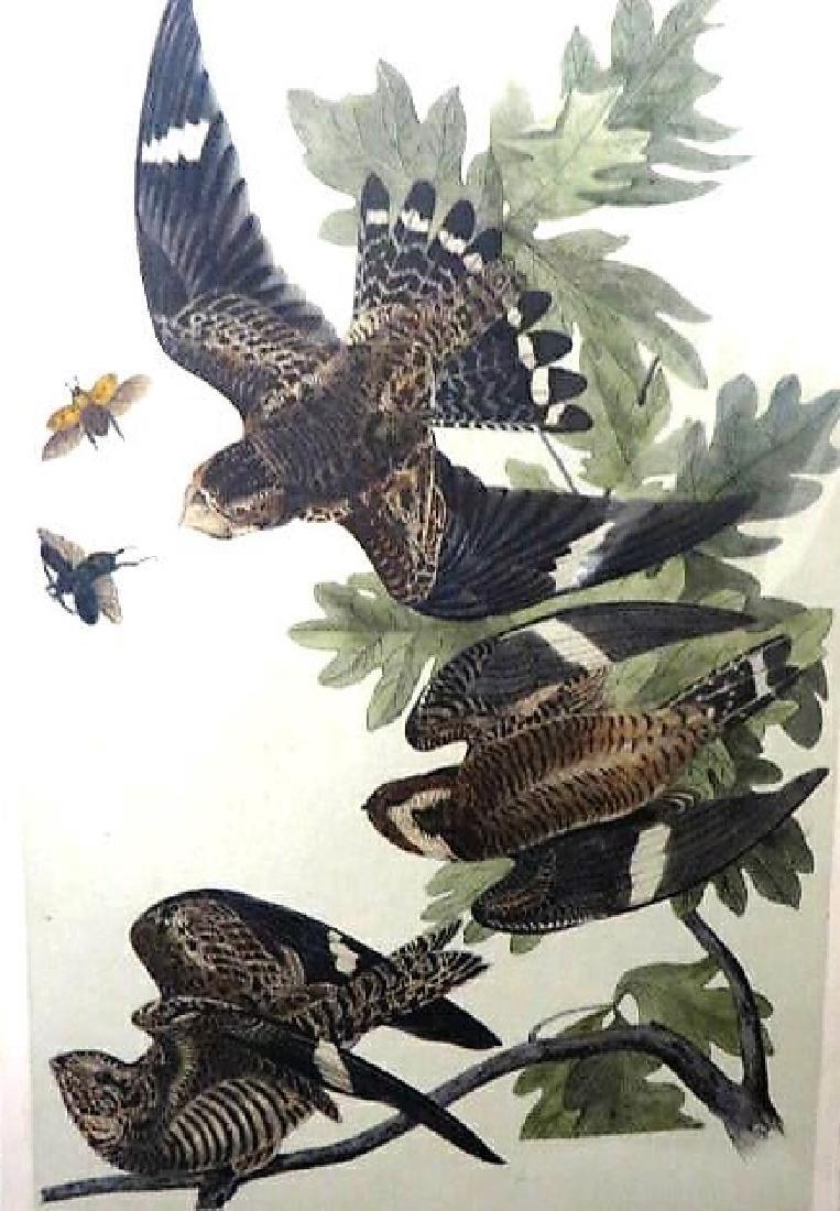 J.J. Audubon. Octavo. Night Hawk No.43
