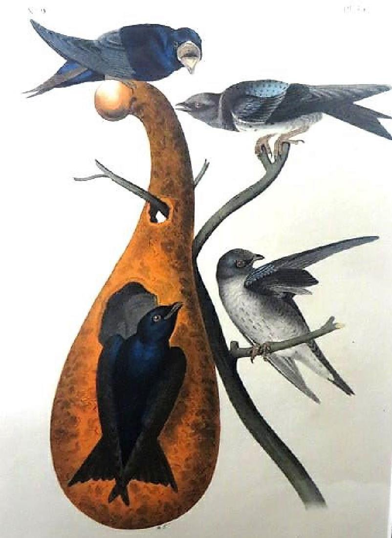 J.J. Audubon. Octavo. Purple Martin No.45