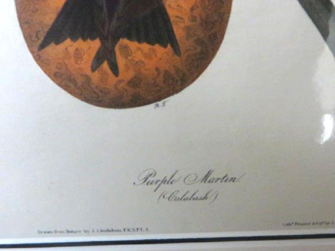 J.J. Audubon. Octavo. Purple Martin No.45 - 2