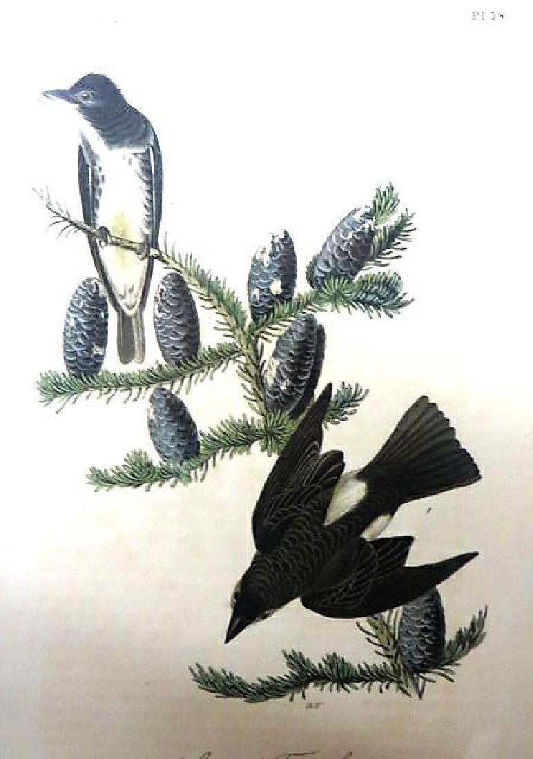 J.J. Audubon. Octavo. Coopers Flycatcher No.58