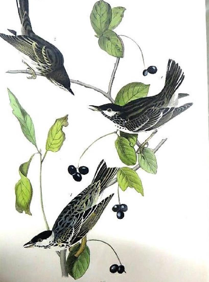 J.J. Audubon. Octavo. Black Poll Wood Warbler No.78