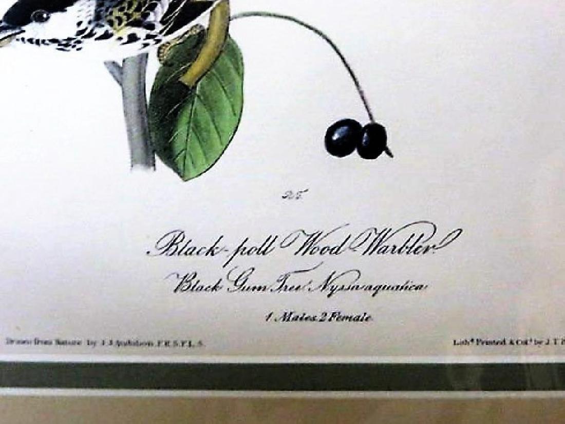 J.J. Audubon. Octavo. Black Poll Wood Warbler No.78 - 2