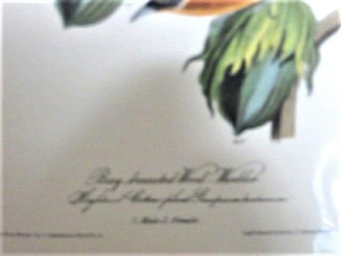J.J. Audubon. Octavo. Bay Breasted Wood Warbler No.80 - 2