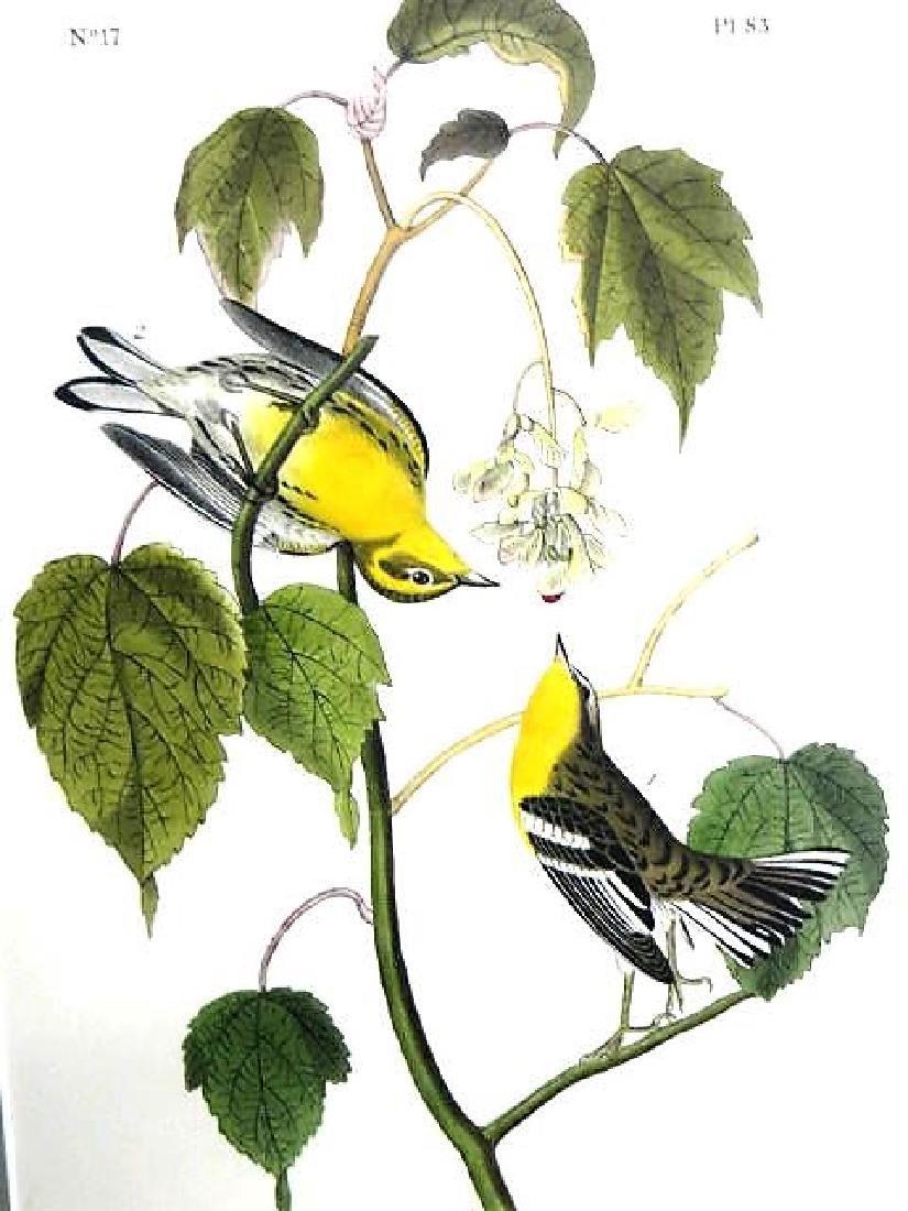 J.J. Audubon. Octavo. Hemlock Warbler No.83