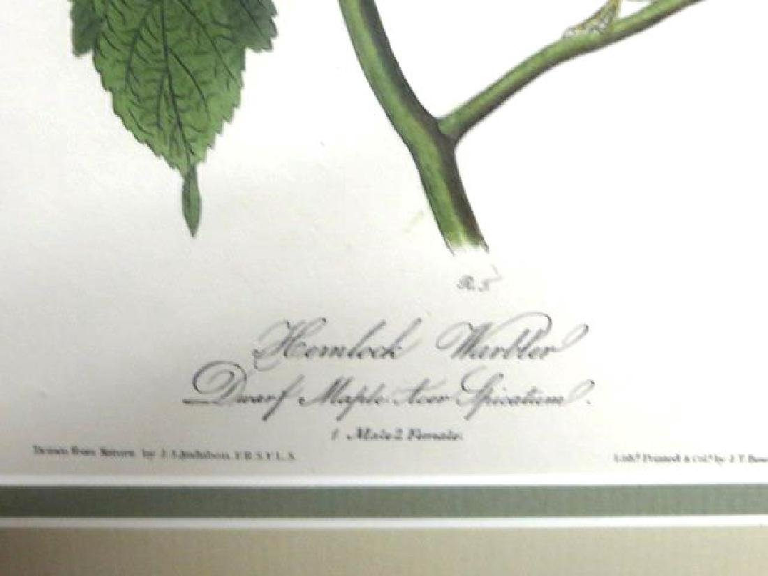 J.J. Audubon. Octavo. Hemlock Warbler No.83 - 2