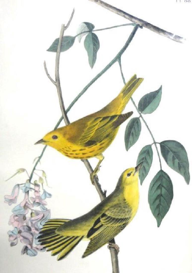 J.J. Audubon. Octavo. Yellow-Poll Wood Warbler No.88