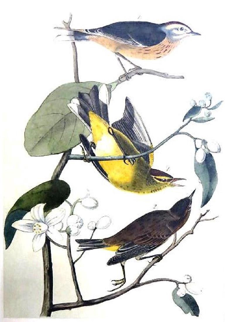 J.J. Audubon. Octavo. Yellow Redpoll Wood Warbler No.90