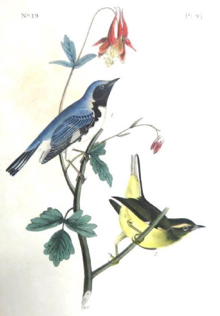 J.J. Audubon. Octavo. Black Throated Warbler No.95
