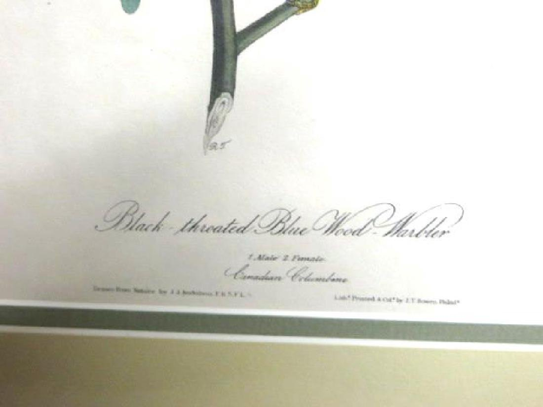 J.J. Audubon. Octavo. Black Throated Warbler No.95 - 2