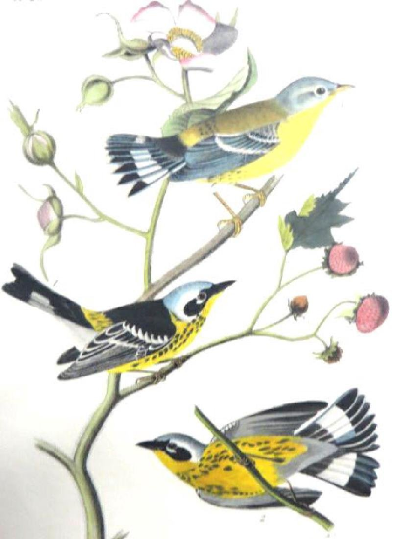 J.J. Audubon. Octavo. Black & Yellow Wood Warbler No.96