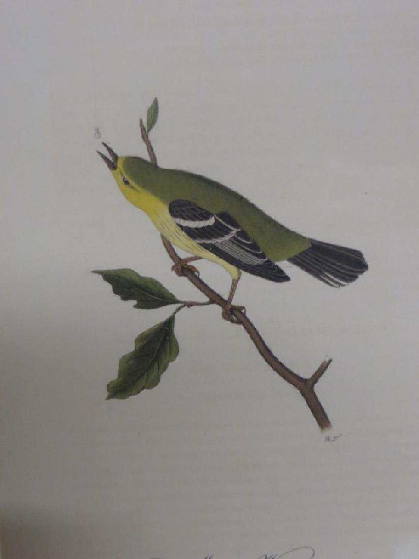 J.J. Audubon. Octavo. Blue Mountain Warbler No.98