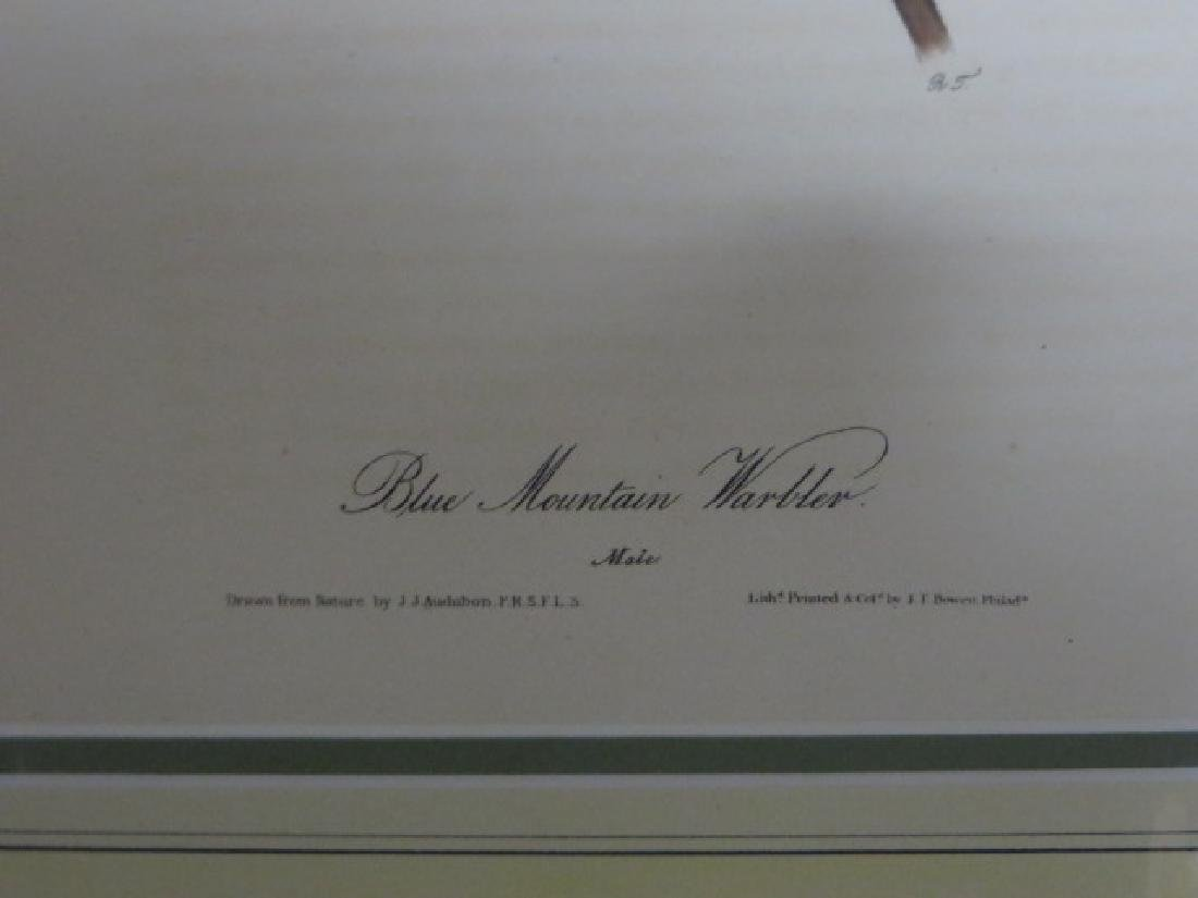 J.J. Audubon. Octavo. Blue Mountain Warbler No.98 - 2
