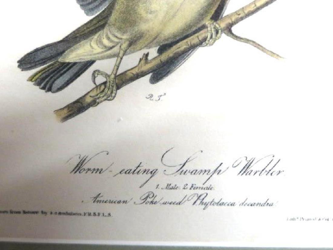 J.J. Audubon. Octavo. Worm-Eating Swamp Warbler No.105 - 2