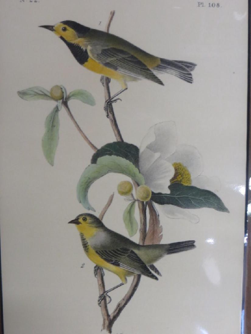 J.J. Audubon. Octavo. Bachman's Swamp Warbler No.108