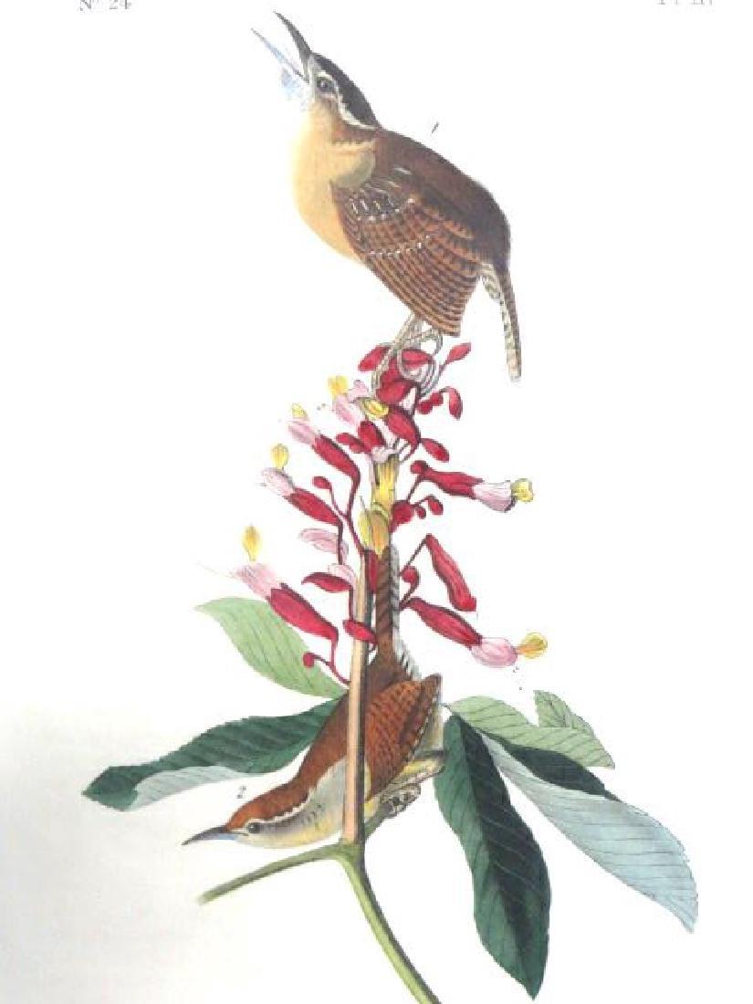 J.J. Audubon. Octavo. Great Carolina Wren No.117