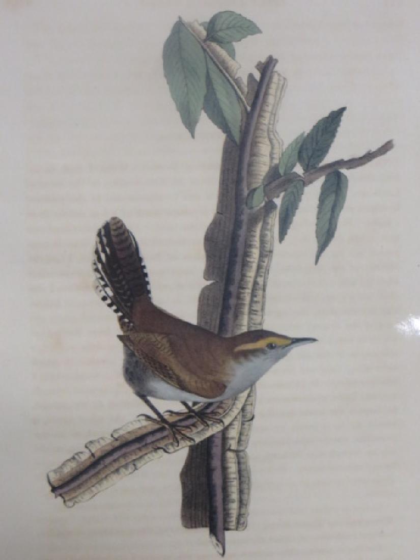 J.J. Audubon. Octavo. Bewicks Wren No.118