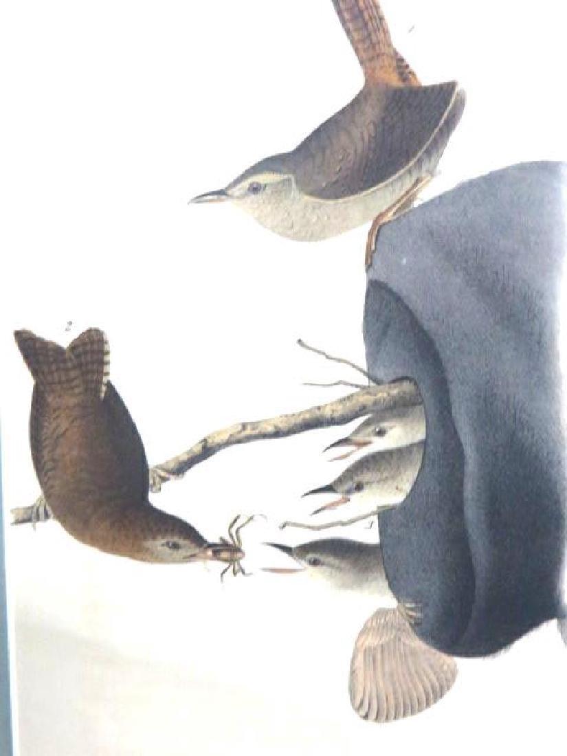 J.J. Audubon. Octavo. House Wren No.120