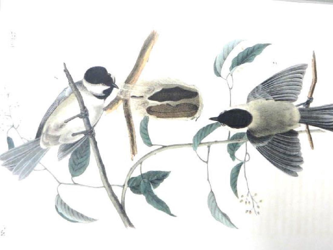 J.J. Audubon. Octavo. Carolina Titmouse No.127