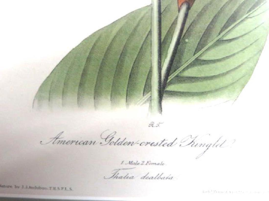 J.J. Audubon. Octavo. American Golden Crested Kinglet - 2
