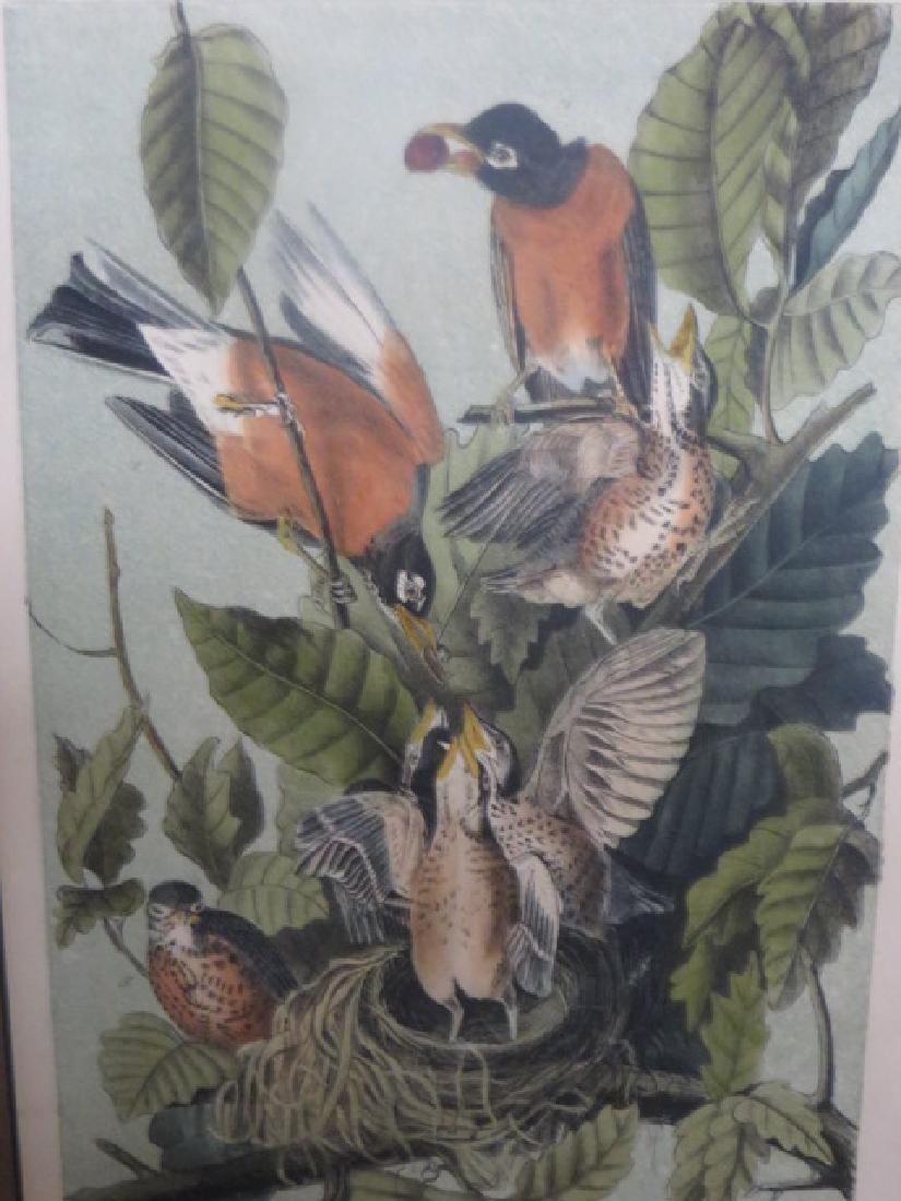 J.J. Audubon. Octavo. American Robin, Or Migratory