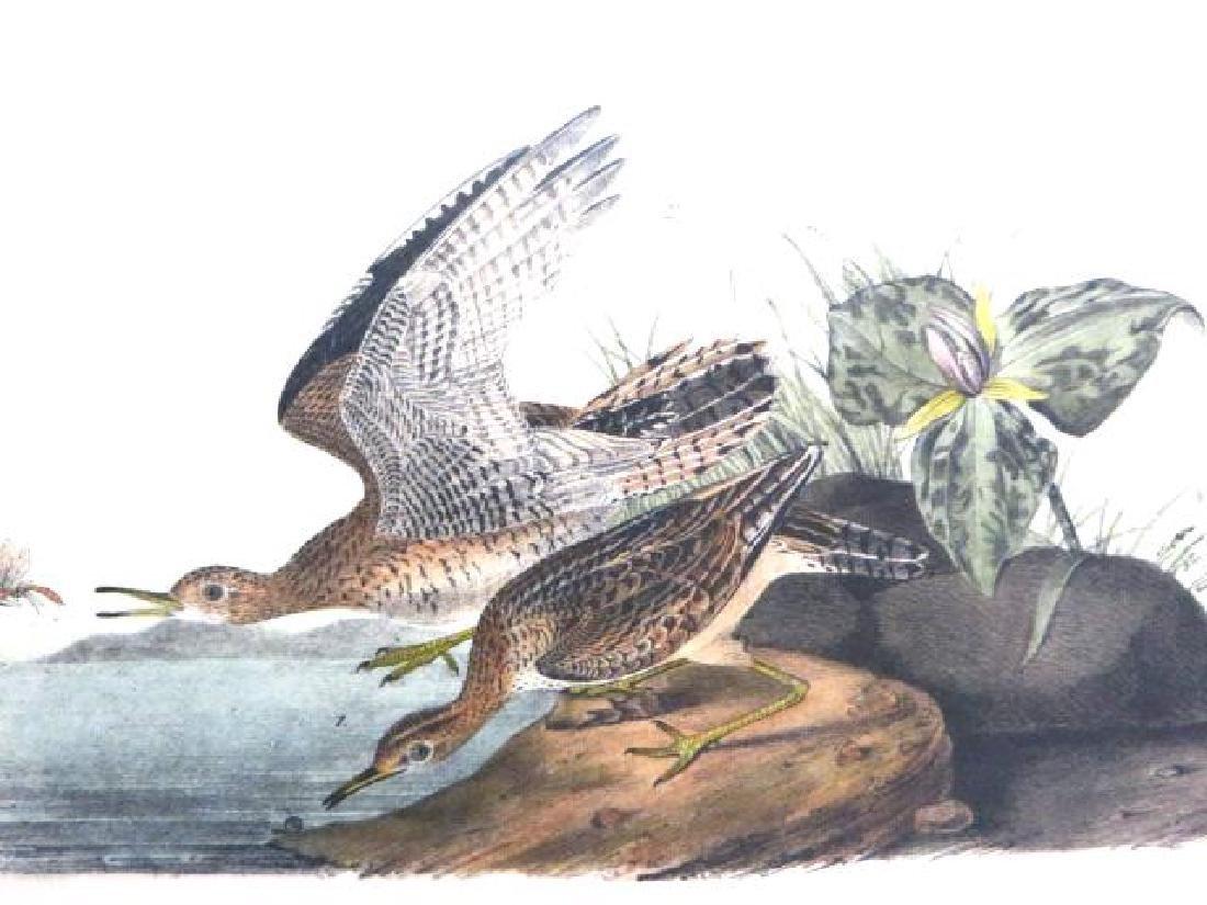 J.J. Audubon. Octavo. Bartramian Sandpiper No.327