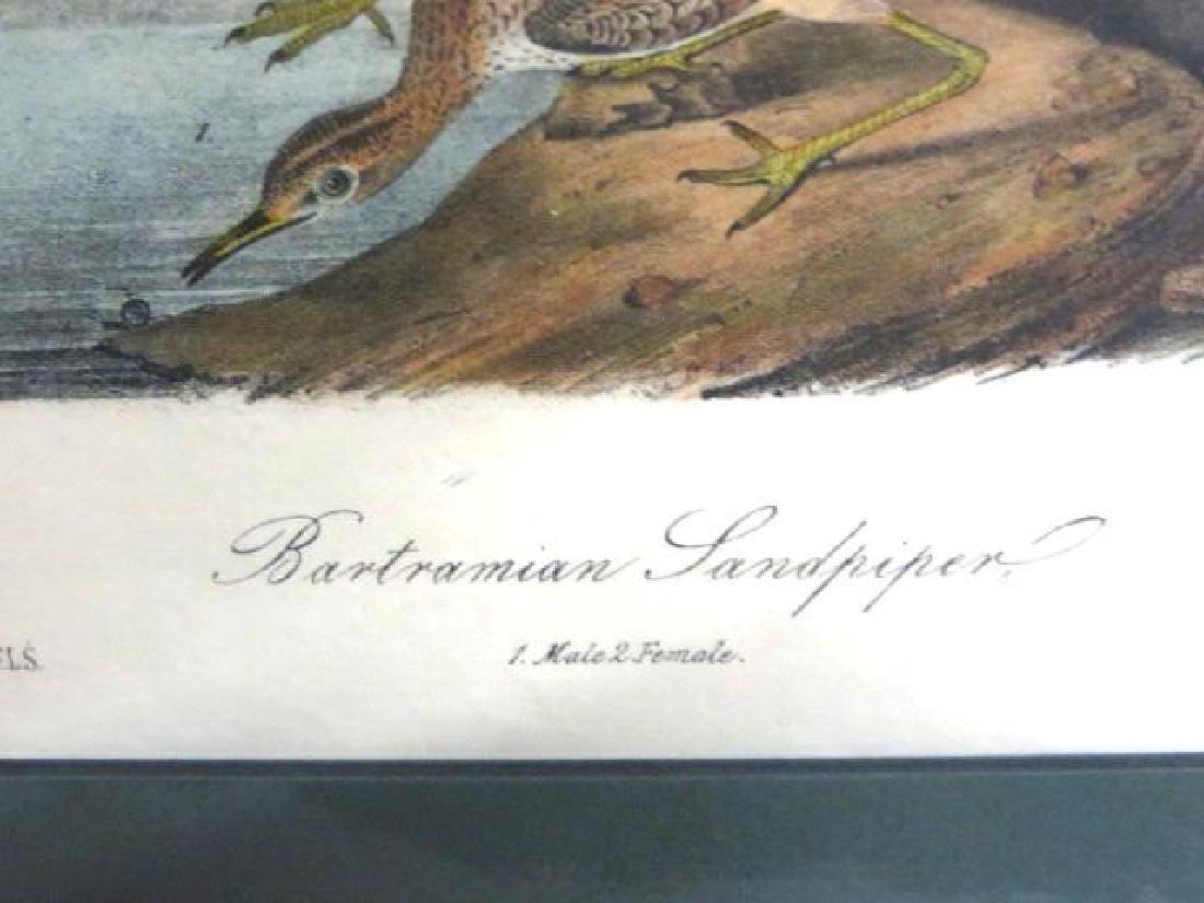 J.J. Audubon. Octavo. Bartramian Sandpiper No.327 - 2