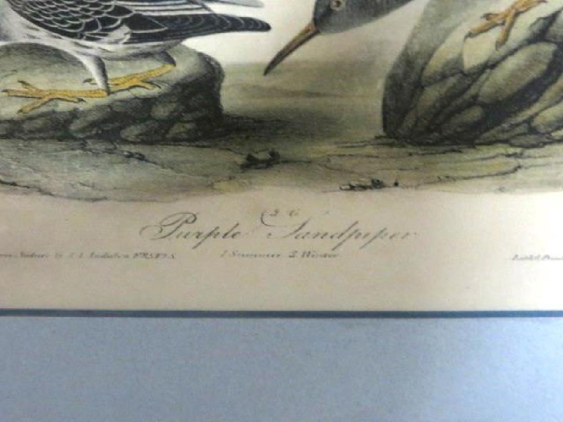 J.J. Audubon. Octavo. Purple Sandpiper No.330 - 3