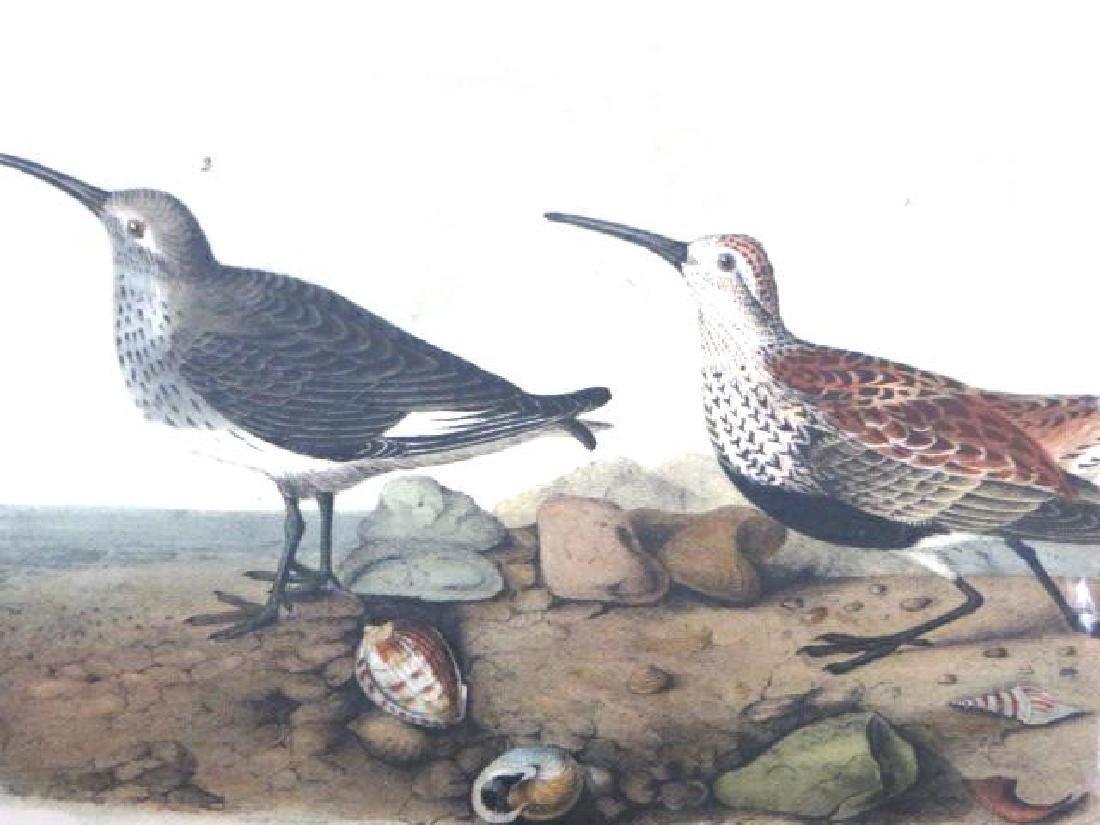 J.J. Audubon. Octavo. Red-Backed Sandpiper No.332