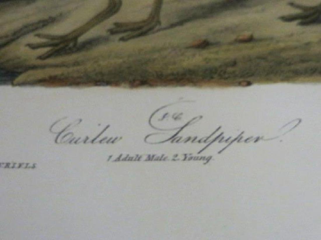 J.J. Audubon. Octavo. Curlew Sandpiper No.333 - 2