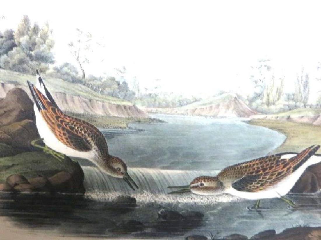 J.J. Audubon. Octavo. Little Sandpiper No.337