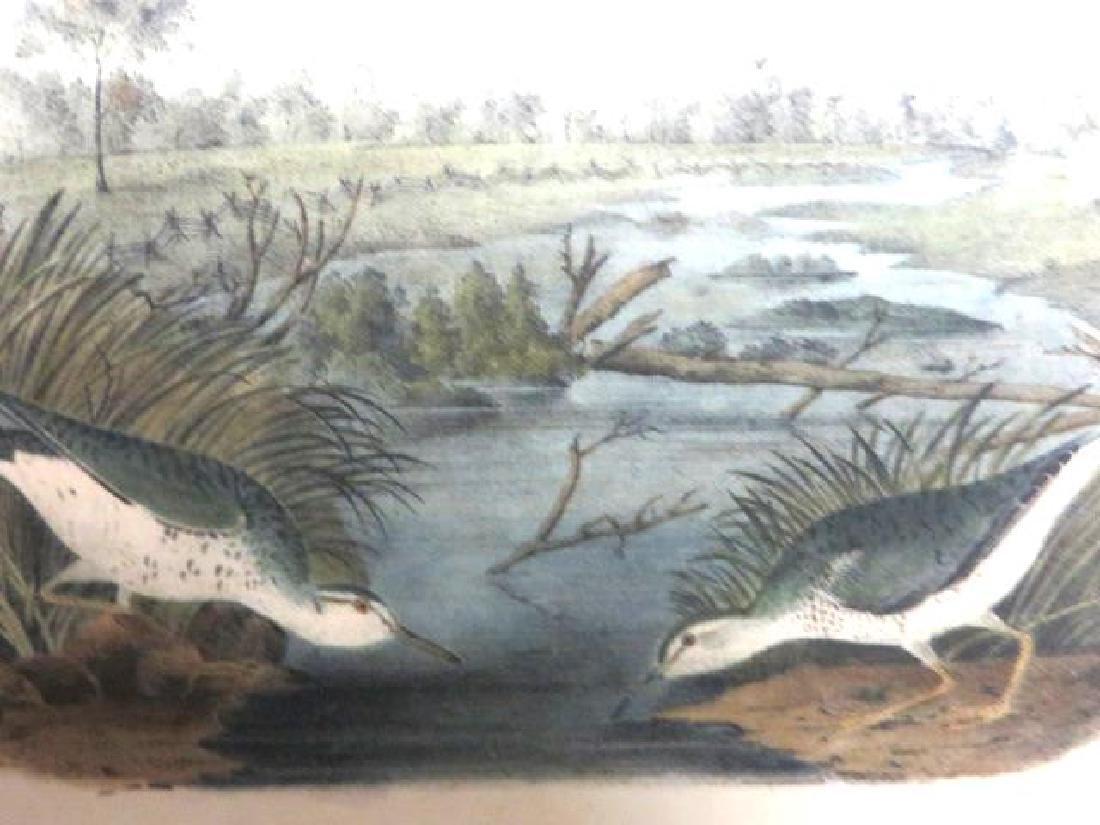 J.J. Audubon. Octavo. Spotted Sandpiper No.342
