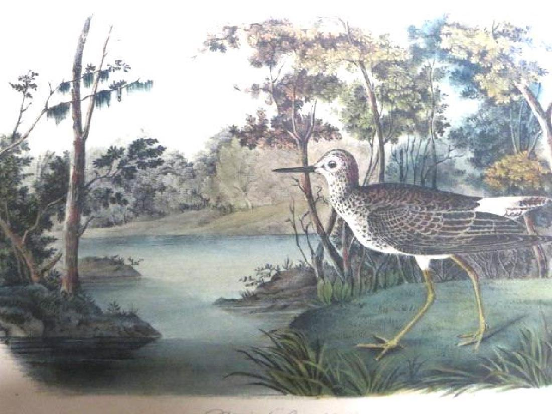 J.J. Audubon. Octavo. Yellow Shank's Snipe No.344
