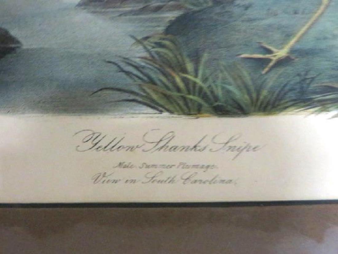 J.J. Audubon. Octavo. Yellow Shank's Snipe No.344 - 2