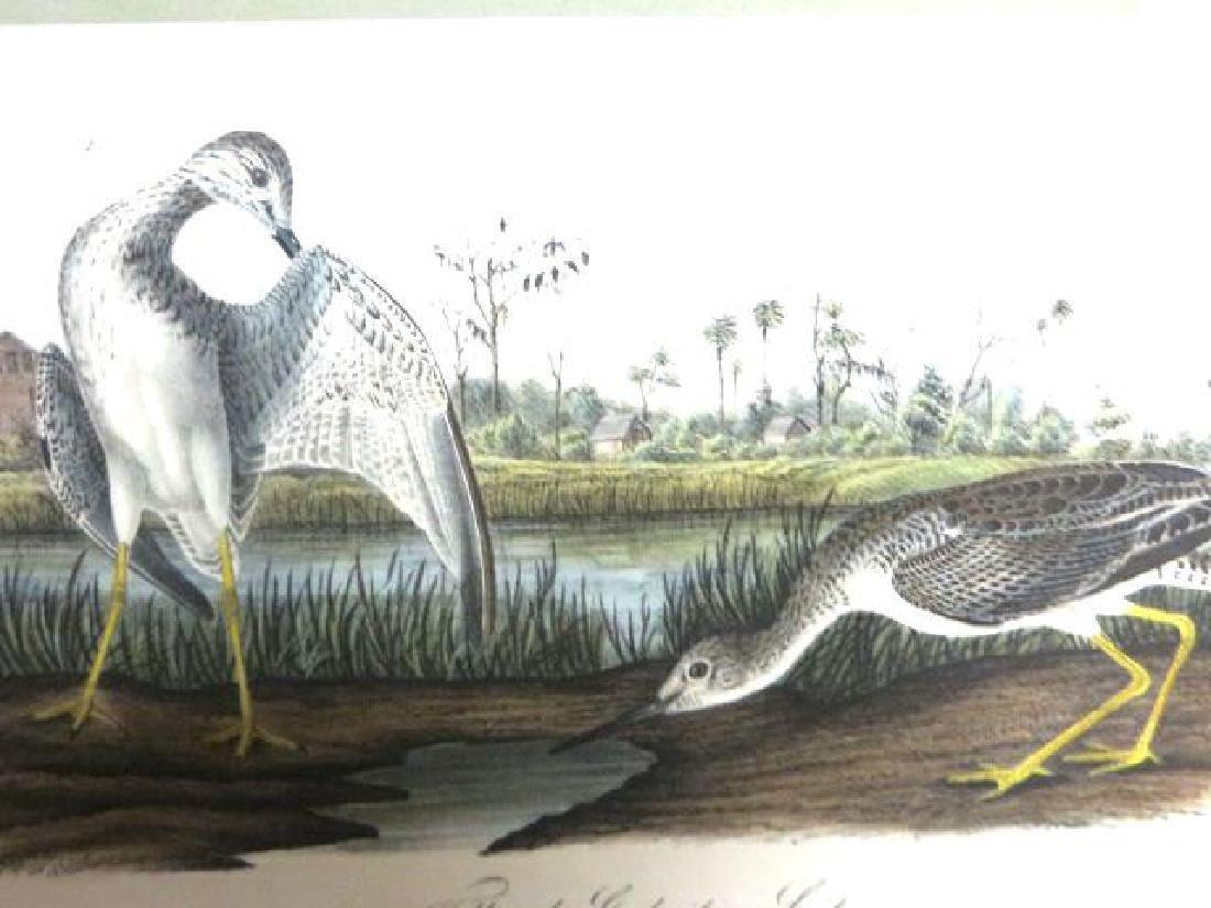J.J. Audubon. Octavo. Tell-Tale Godwit Or Snipe No.345