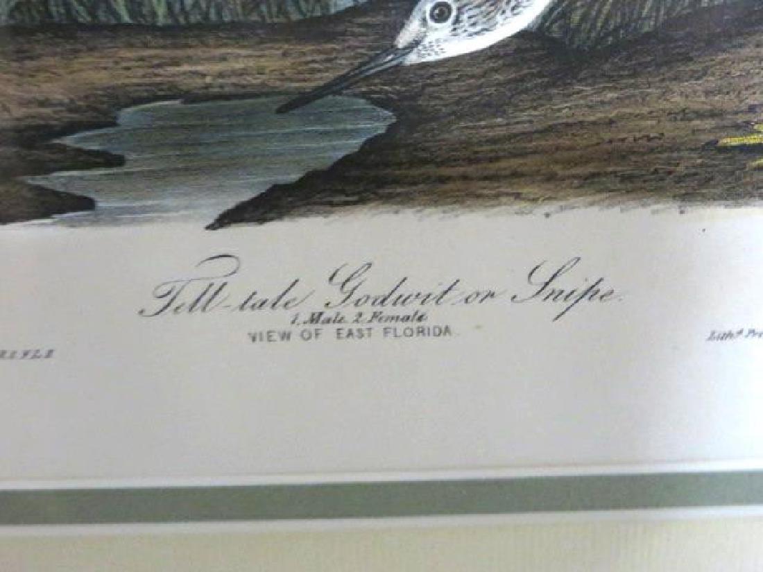 J.J. Audubon. Octavo. Tell-Tale Godwit Or Snipe No.345 - 2