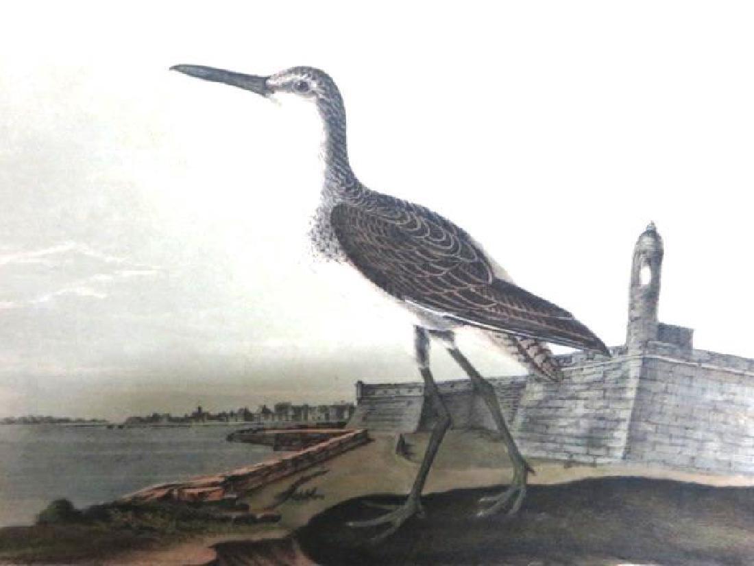 J.J. Audubon. Octavo. Greenshank No.346