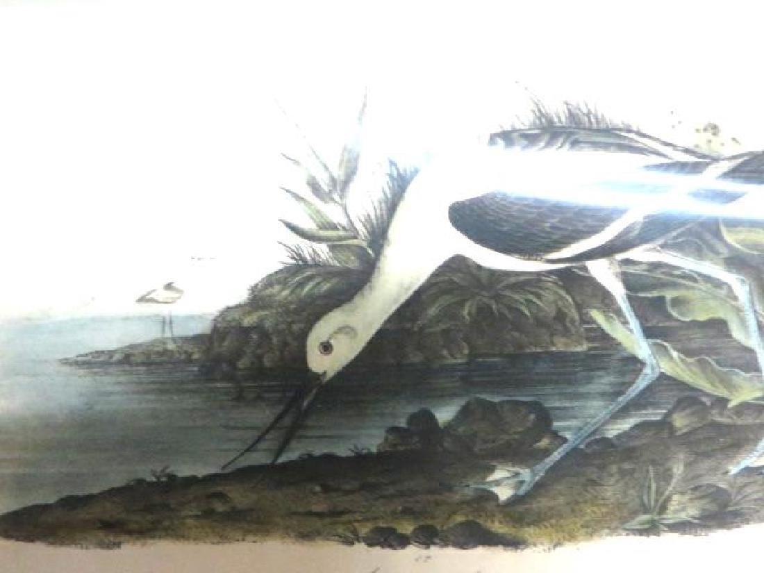 J.J. Audubon. Octavo. American Avocet No.353