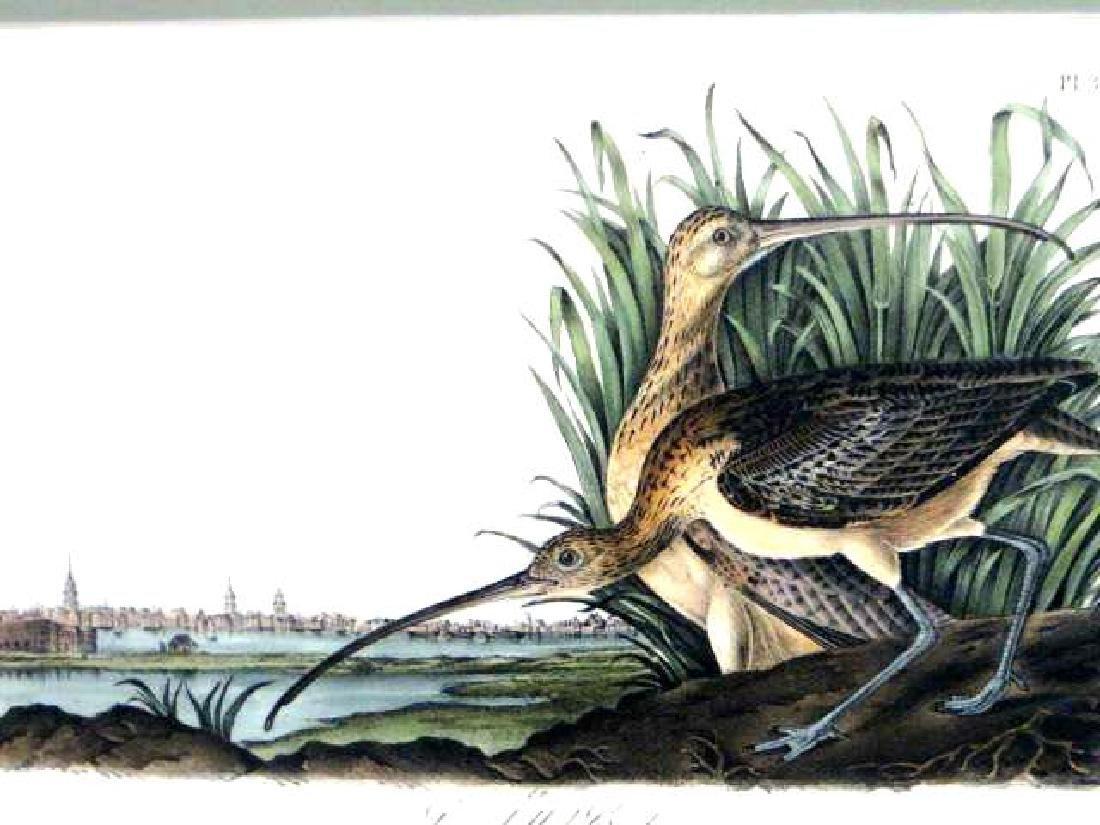 J.J. Audubon. Octavo. Long Billed Curlew No.355