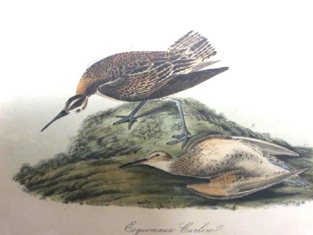 J.J. Audubon. Octavo. Esquimaux Curlew No.357