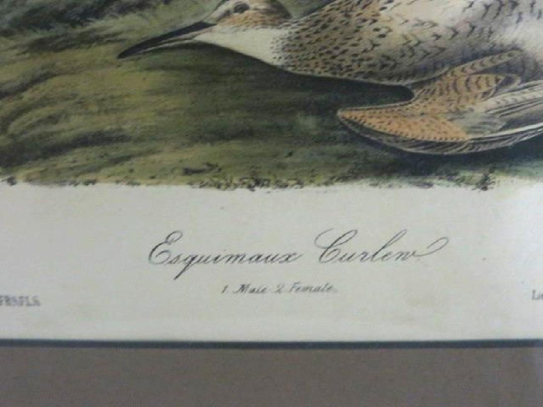 J.J. Audubon. Octavo. Esquimaux Curlew No.357 - 2
