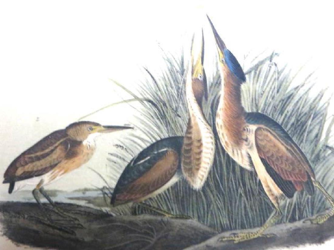 J.J. Audubon. Octavo. Least Bittern No.366