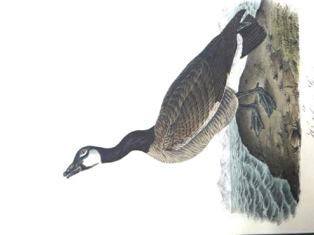 J.J. Audubon. Octavo. Hutchins Goose No.377