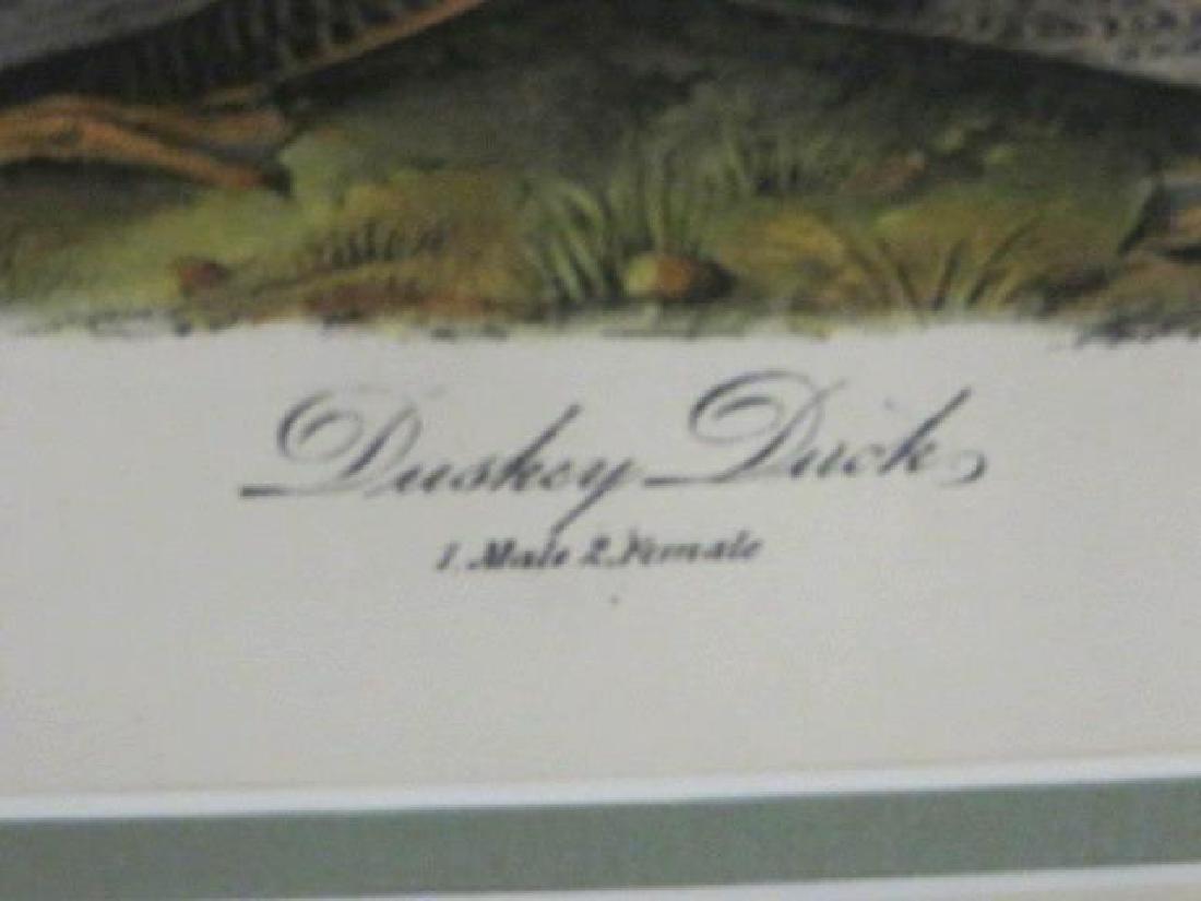 J.J. Audubon. Octavo. Duskey Duck No.386 - 2