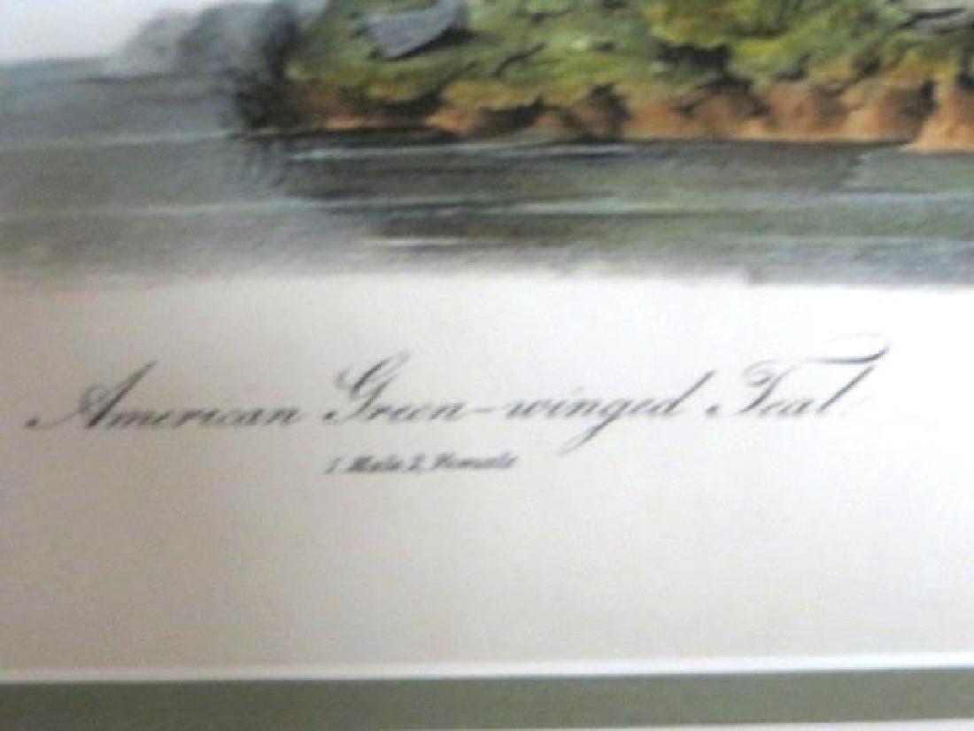 J.J. Audubon. Octavo. American Green Winged Teal No.392 - 2
