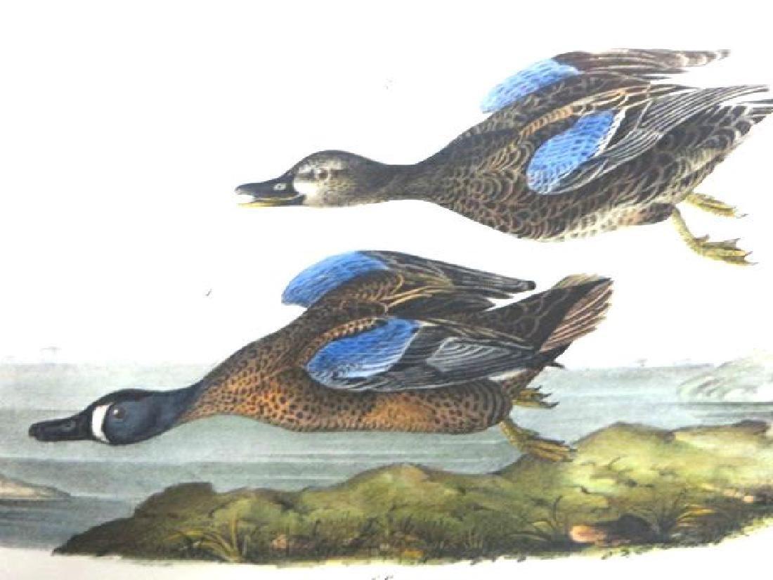 J.J. Audubon. Octavo. Blue Winged Teal No.393